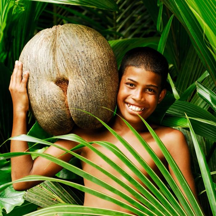 Орехи с сейшельских островов