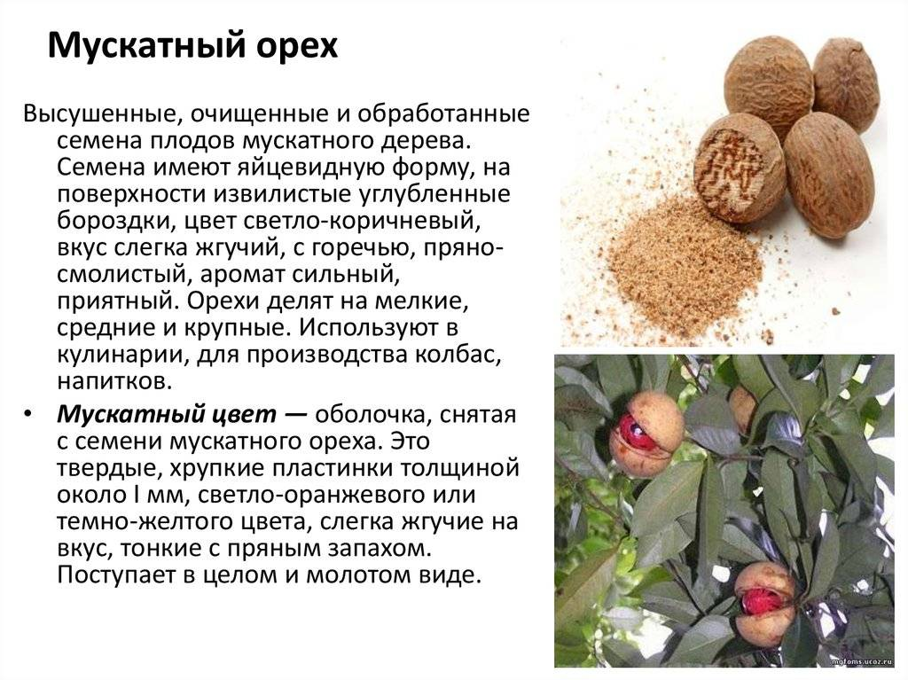 Мускатный орех: польза и вред, полезные свойства для женщин и мужчин - орех эксперт
