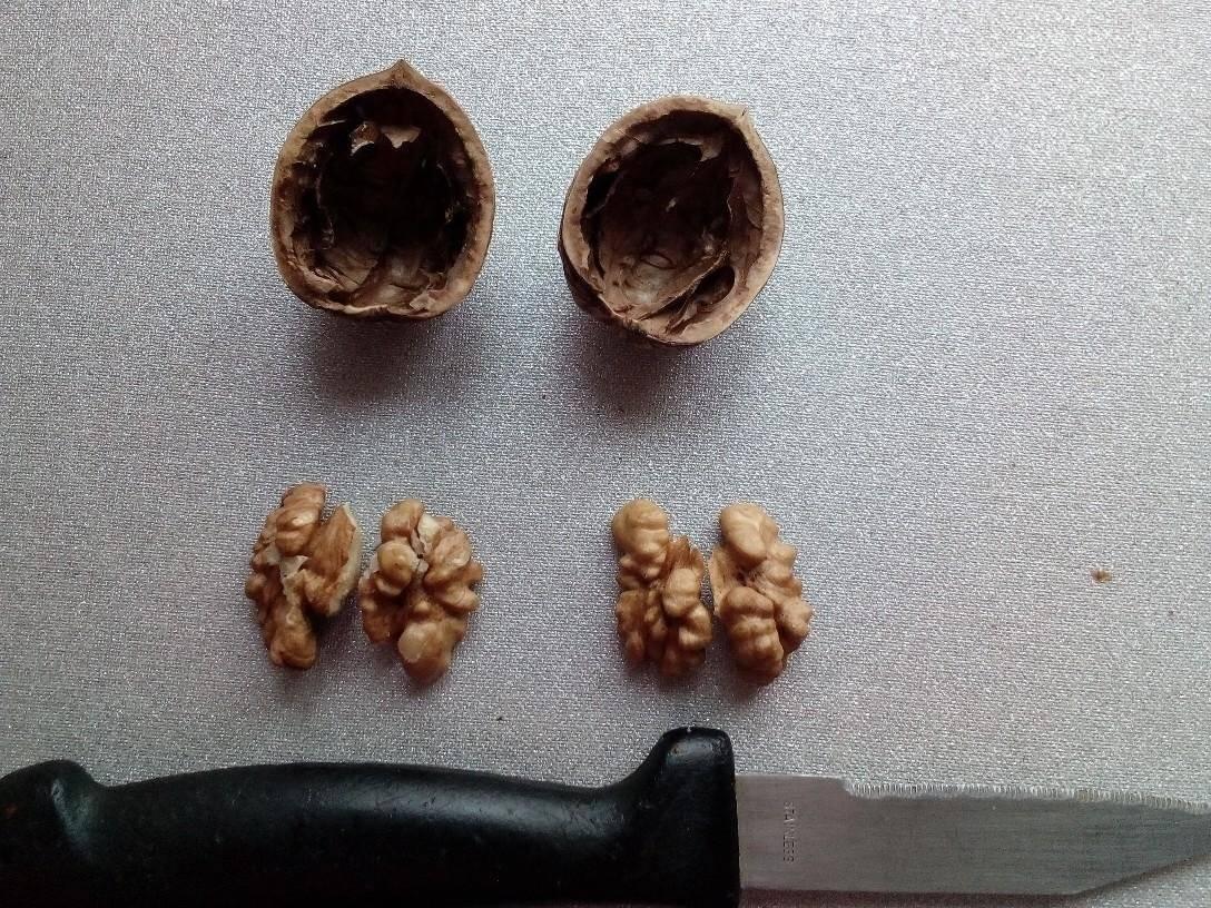 Заболевания грецкого ореха. опасные болезни и вредители грецкого ореха чем обработать грецкий орех от болезней