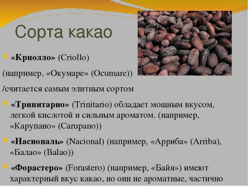 Какао-бобы: состав, польза, противопоказания, рецепты блюд