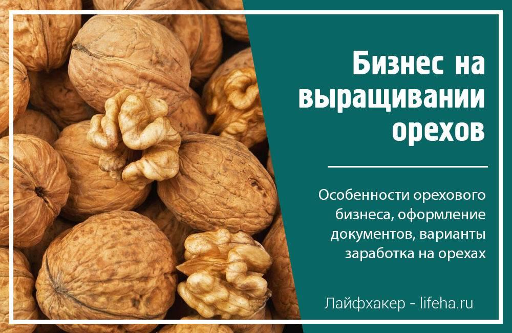Выращивание орехов как бизнес. расчеты и советы