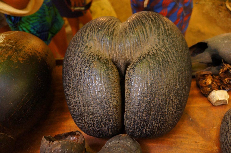 Самые большие орехи в мире