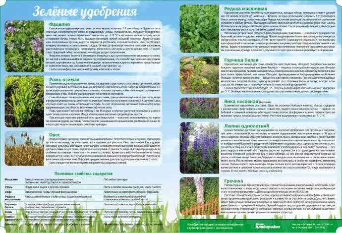 Когда и какие сидераты лучше сеять в огороде для обогащения почвы