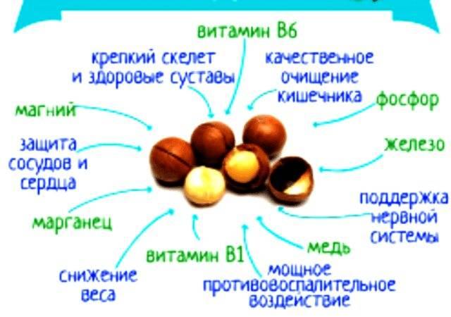 Орех макадамия польза и вред для организма, где растёт, состав
