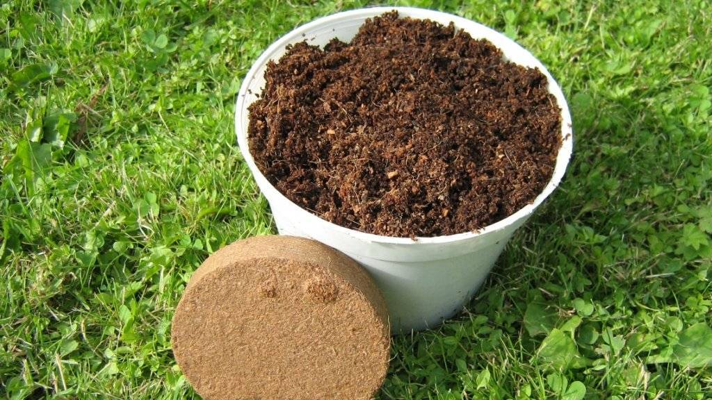 Экологически чистый кокосовый субстрат: подходит ли для выращивания рассады и как еще его можно использовать?
