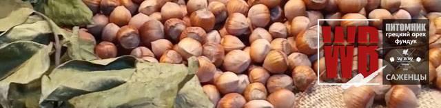 Выращивание ореха фундука приносит резидуальный доход