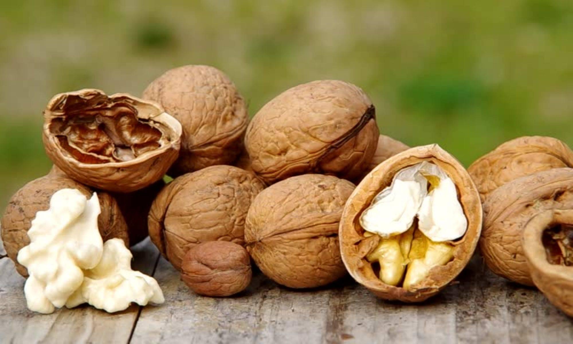 Грецкие орехи: польза и вред, полезные свойства, показания и противопоказания, народные рецепты