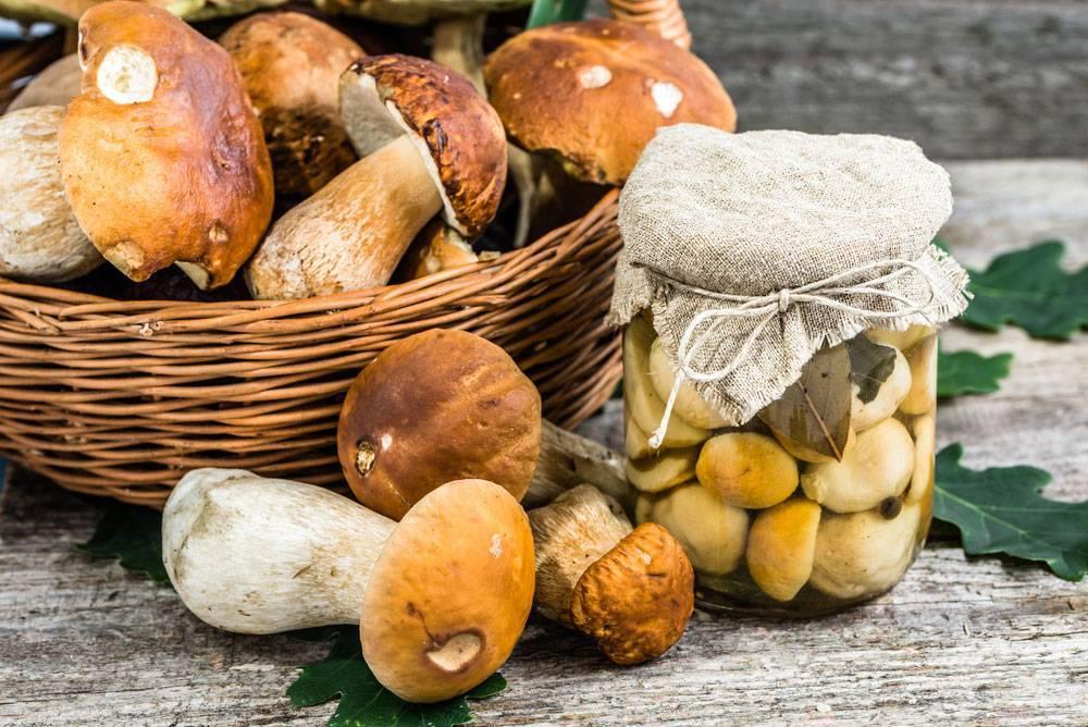Уголовка за грибы: в россии ужесточили правила сбора даров природы