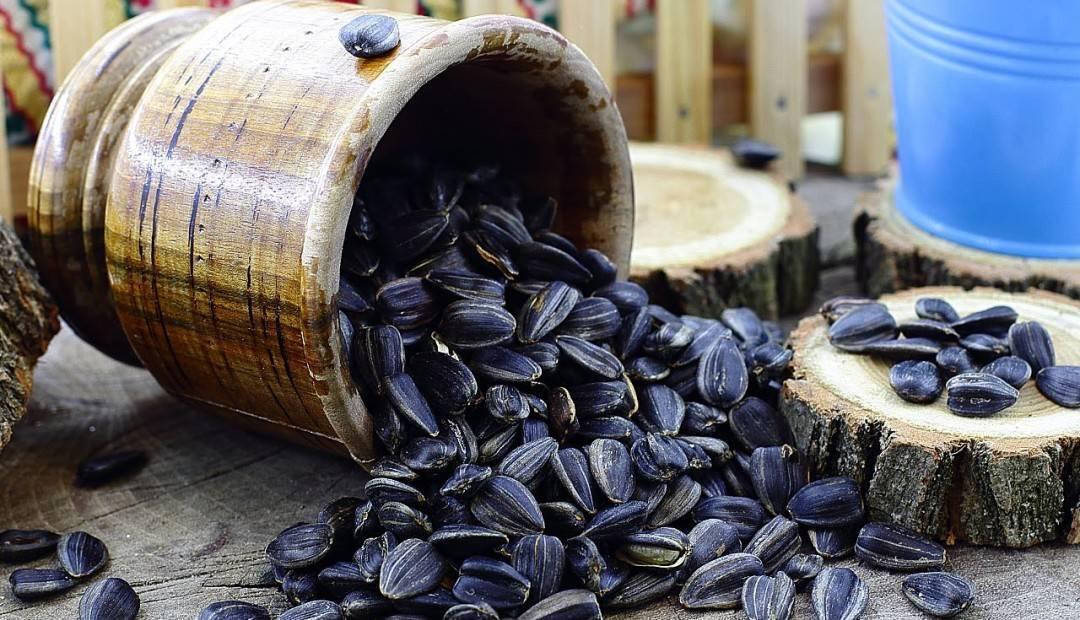 Польза и вред семечек подсолнуха для женщин и мужчин: жаренные или сырые