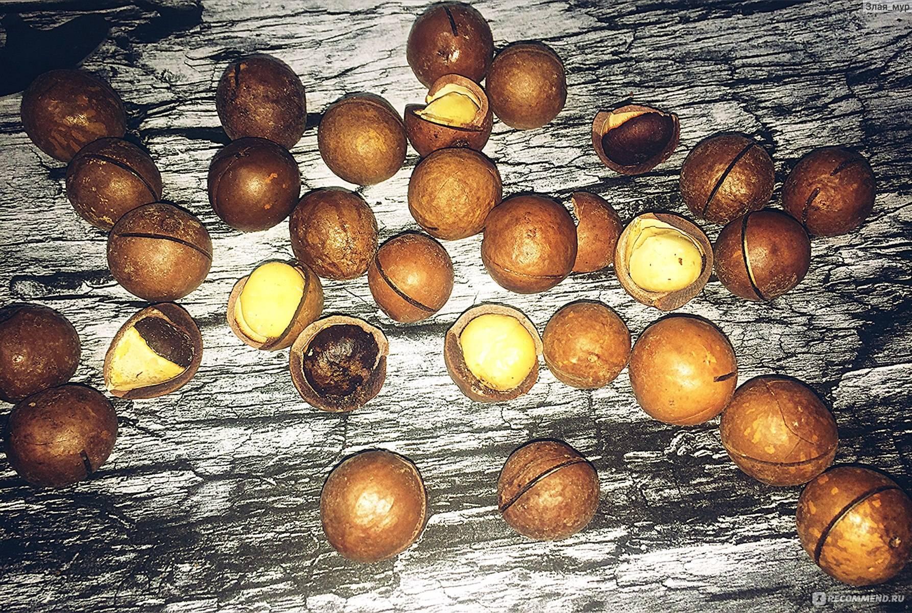 Скорлупа ореха макадамия: состав, свойства, польза и вред