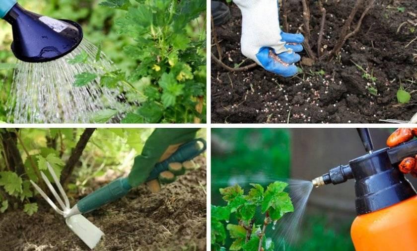 Как часто плодоносит грецкий орех - советы для садоводов и обзор лучших сортов для выращивания (75 фото)