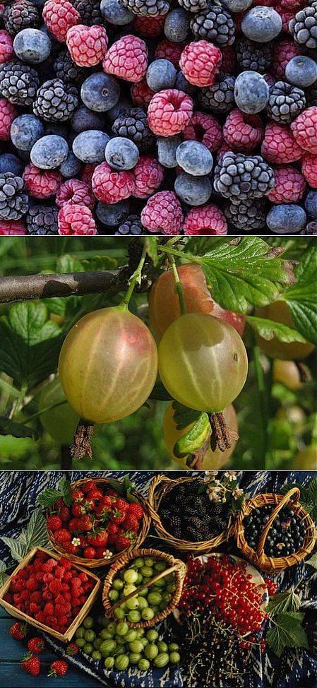 Комбинированный сад: грецкий орех и плодово-ягодные культуры