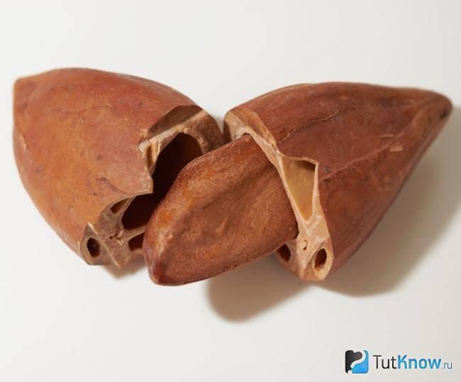 Пекан орех: польза и вред