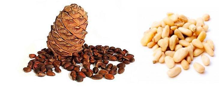 Кедровые орехи - польза и вред для мужчин, женщин, организма
