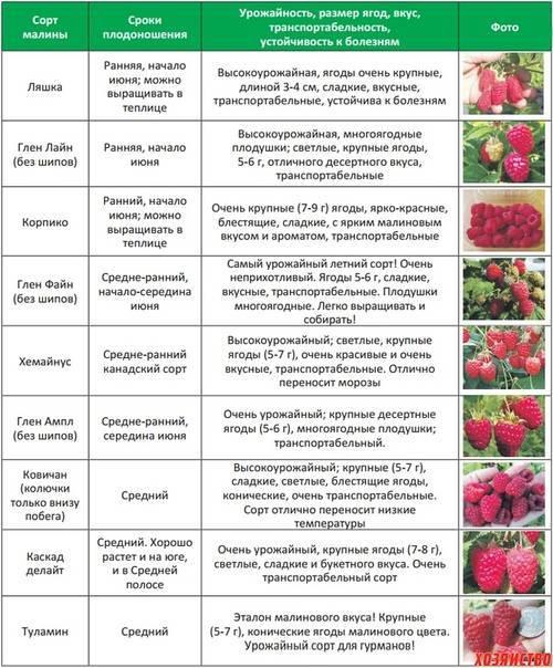 Миндаль виктория описание сорта | ваши поделки.ру |