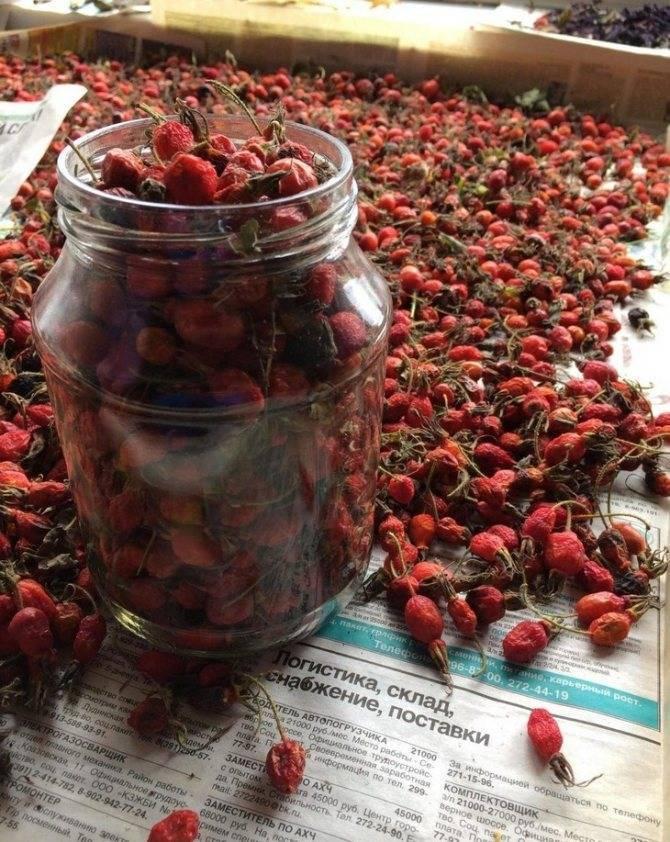 Когда собирать шиповник, как заготовить и хранить зимой: сроки и правила сушки плодов