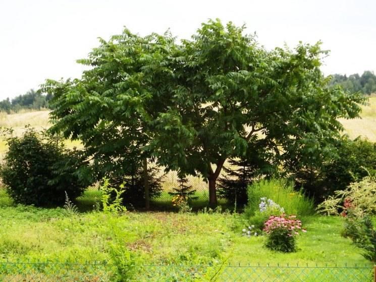 Что посадить под деревьями в саду и как это сделать правильно ?