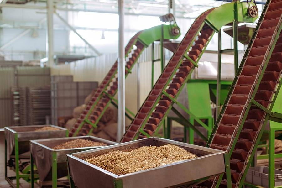 Как и зачем делают надрез на орехе макадамия