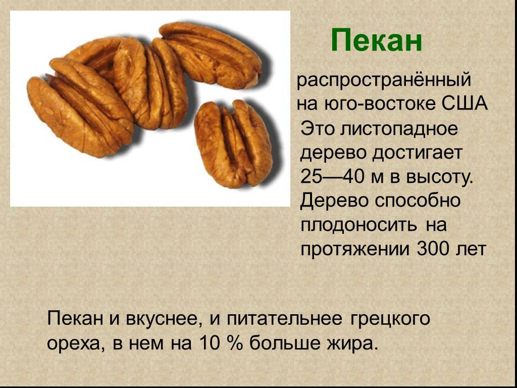 Серый орех выращивание из семян. как вырастить орехи: орех маньчжурский, орех серый, орех зибольда (айлантолистный)