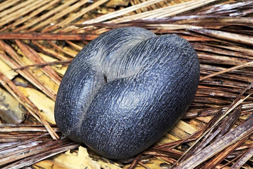 Сейшельский орех: калорийность, польза и вред   food and health