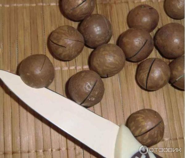 Скорлупа ореха макадамия и способы ее применения
