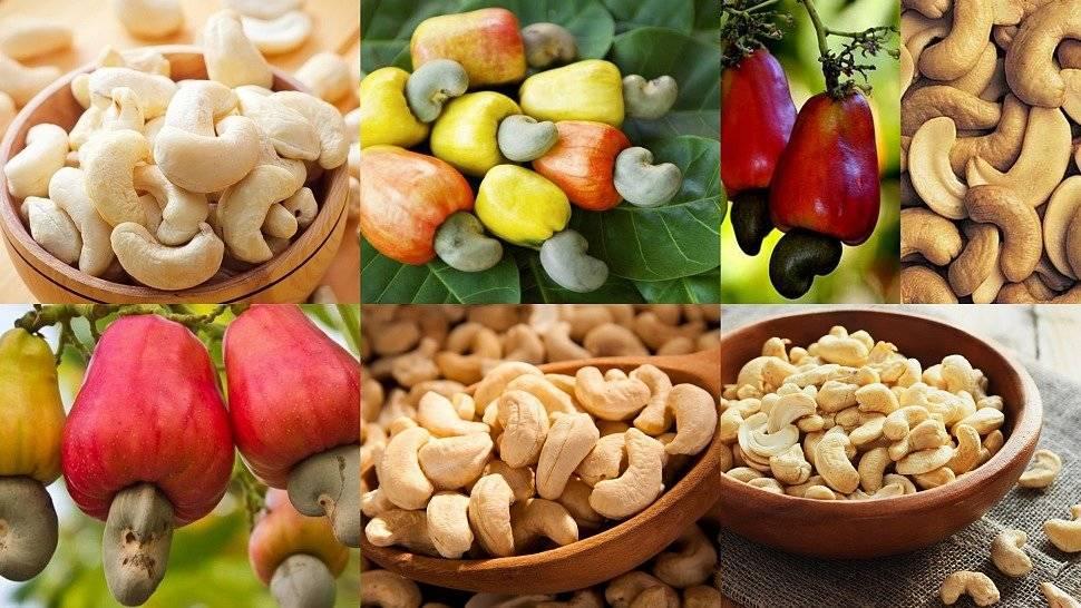 Можно ли при сахарном диабете есть орехи кешью? польза, вред, противопоказания и правила употребления