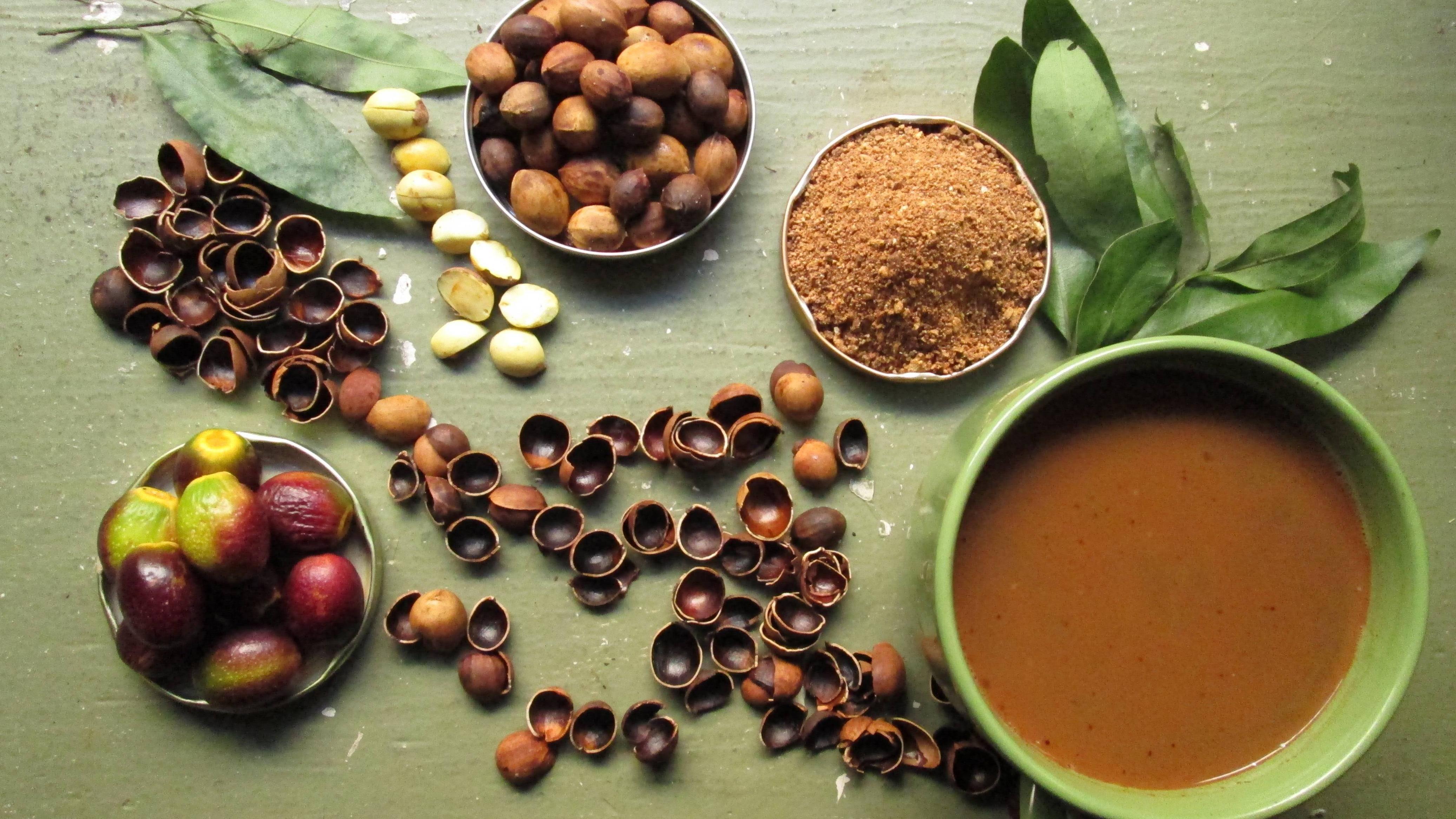 Жёлудь - описание растения и плода, полезные свойства и применение, как вырастить дуб из желудя в домашних условиях