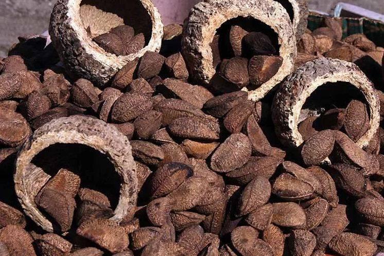Все про бразильский орех: полезные свойства, противопоказания, как растет!
