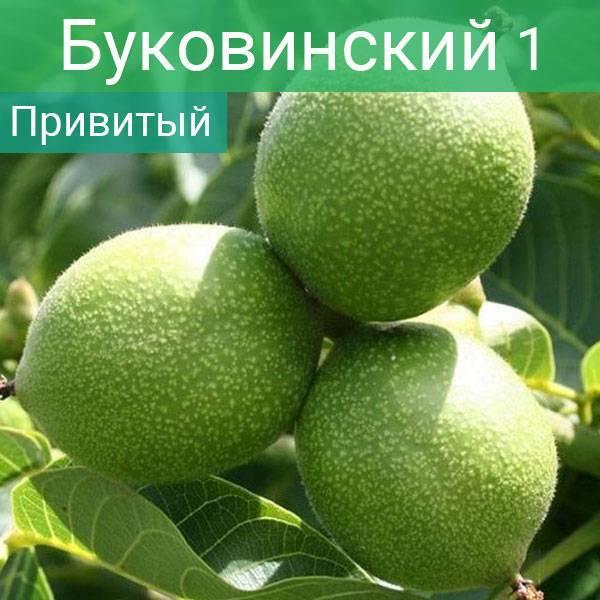 Грецкий орех — местные формы — портал ореховод