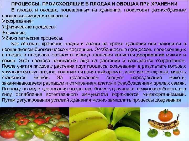 Рекомендации по выбору и срокам хранения плодоовощной продукции