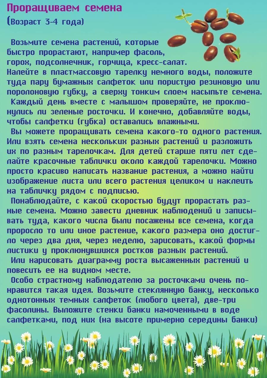 Семена подсолнуха в рационе детей. с какого возраста ребенку можно семечки - onwomen.ru