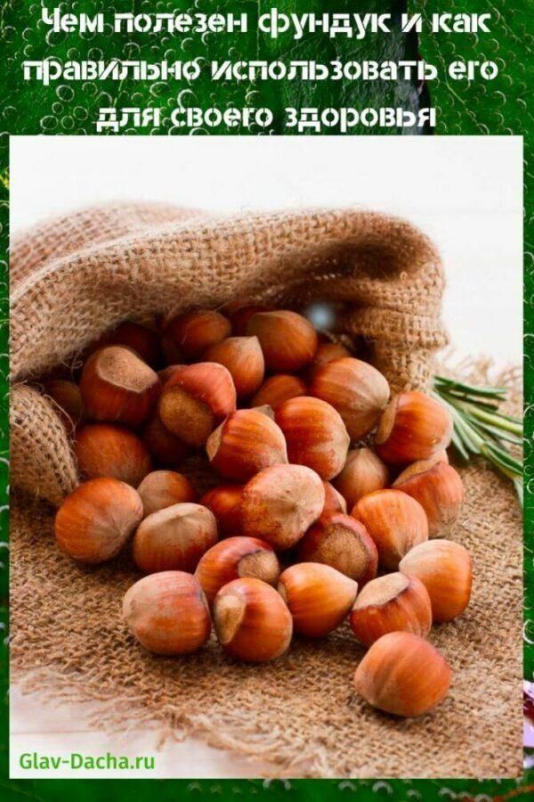 Фундук орехи: польза и вред