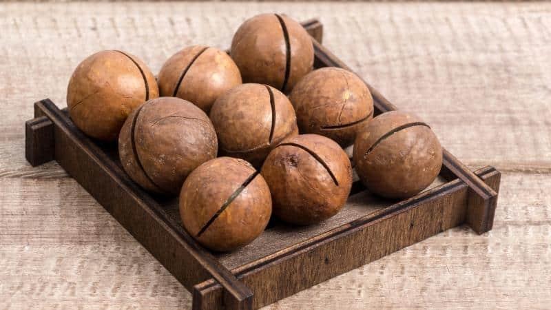Орех макадамия: полезные свойства и противопоказания для женщин и мужчин