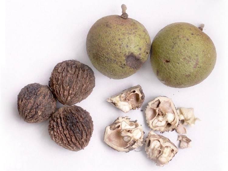 Черный орех — свойства и противопоказания, польза и вред