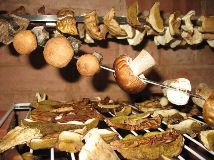 Как сушить грибы и как правильно хранить сушеные грибы