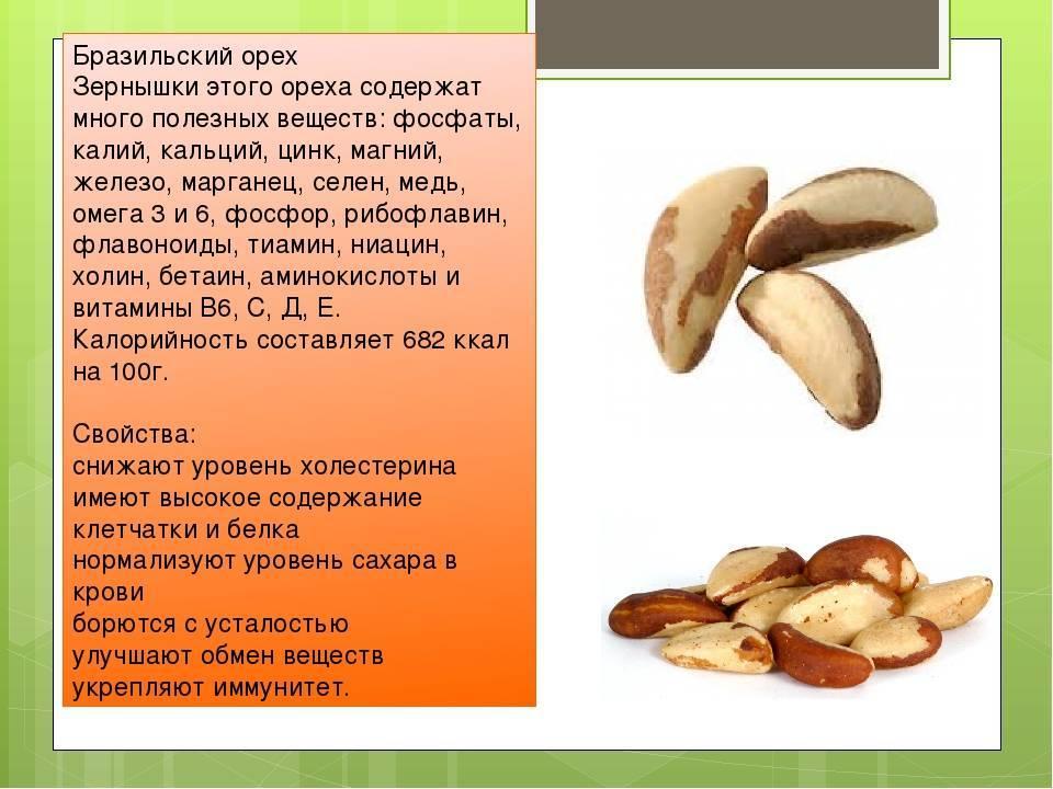 Бразильский орех: полезные свойства и вред | польза и вред