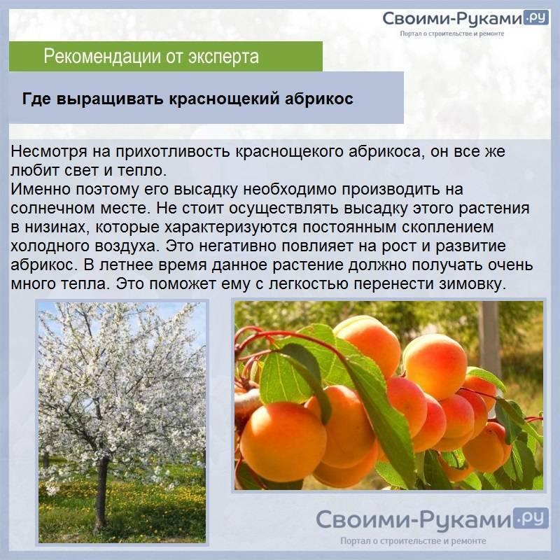 Посадка миндаля и уход за деревом в открытом грунте: выращивание в домашних условиях, удобрения осенью и подкормки весной, и как вырастить на даче из саженцев?