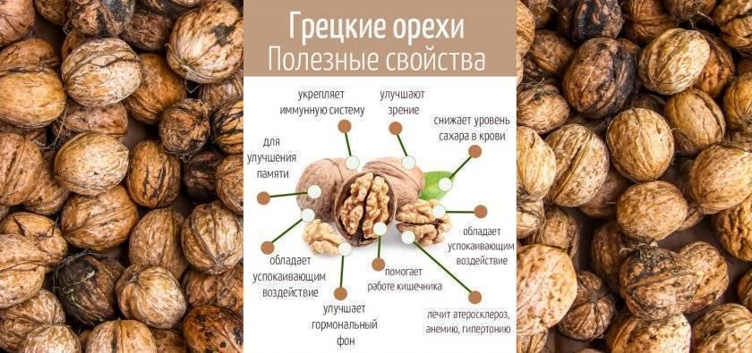 Самые полезные орехи для организма - обзор самых лучших