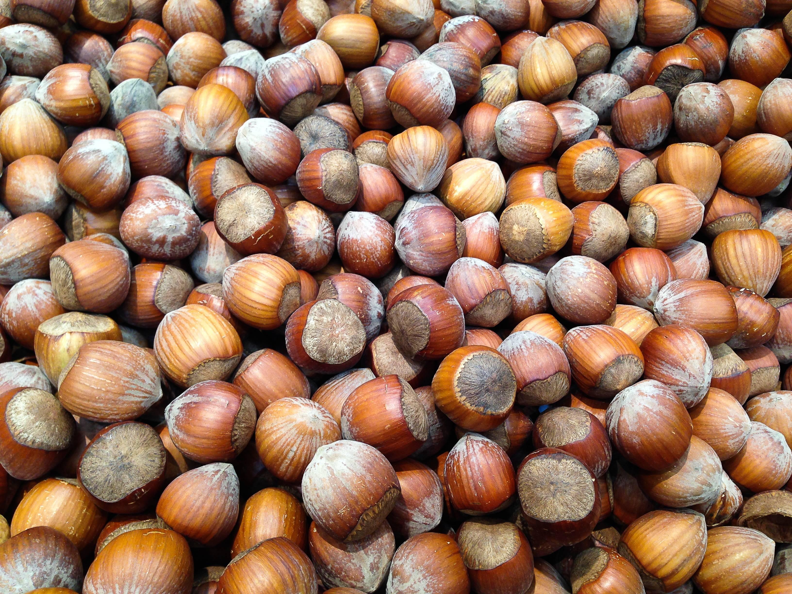 Как растет фундук (орешник): как посадить из ореха, когда цветет - орех эксперт