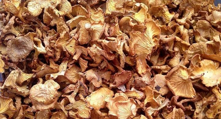 Как правильно сушить грибы?   впоходе