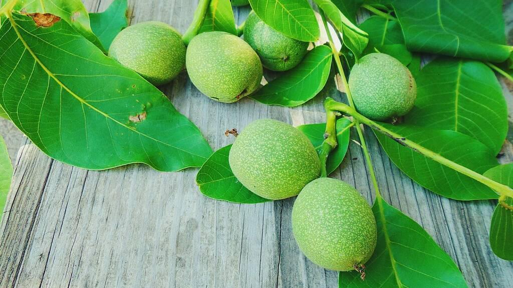 Зеленые грецкие орехи: польза и вред   польза и вред
