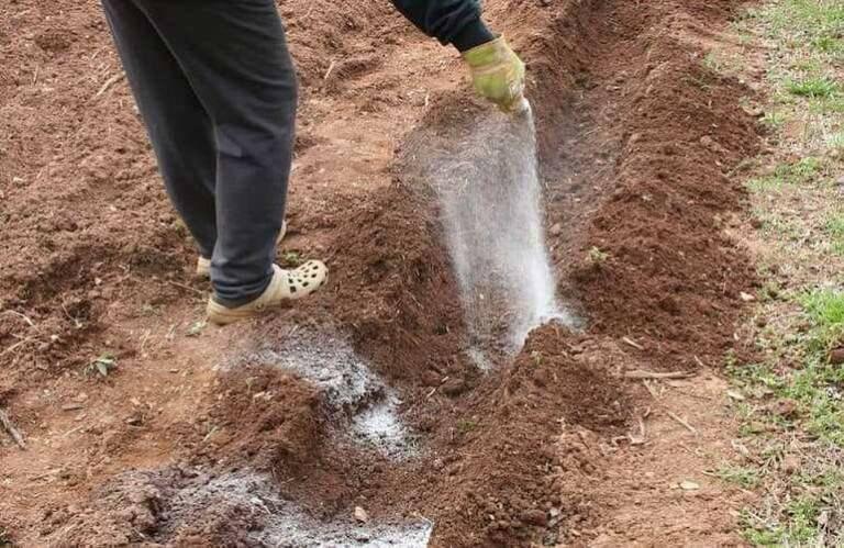 Как посадить грецкий орех: основы правильной посадки саженцев и семян весной и рекомендации с видео
