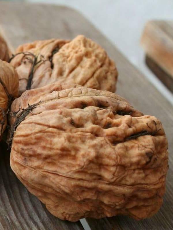 Сорта(виды) грецких орехов: чандлер, чили, великан, идеал, молдавские, астаховский