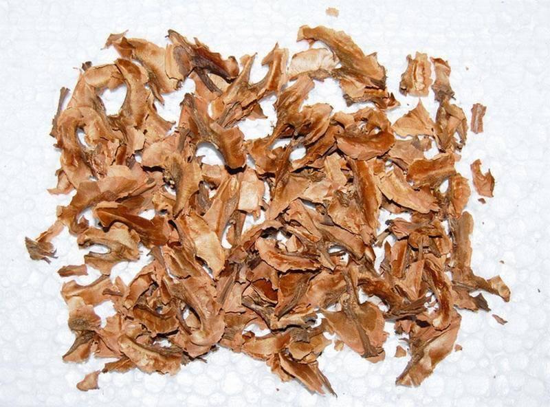 Настойка из перегородок грецкого ореха: польза и вред, полезные свойства в медицине и косметологии, а также рецепты напитка из перепонок на водке, самогоне и на спирту