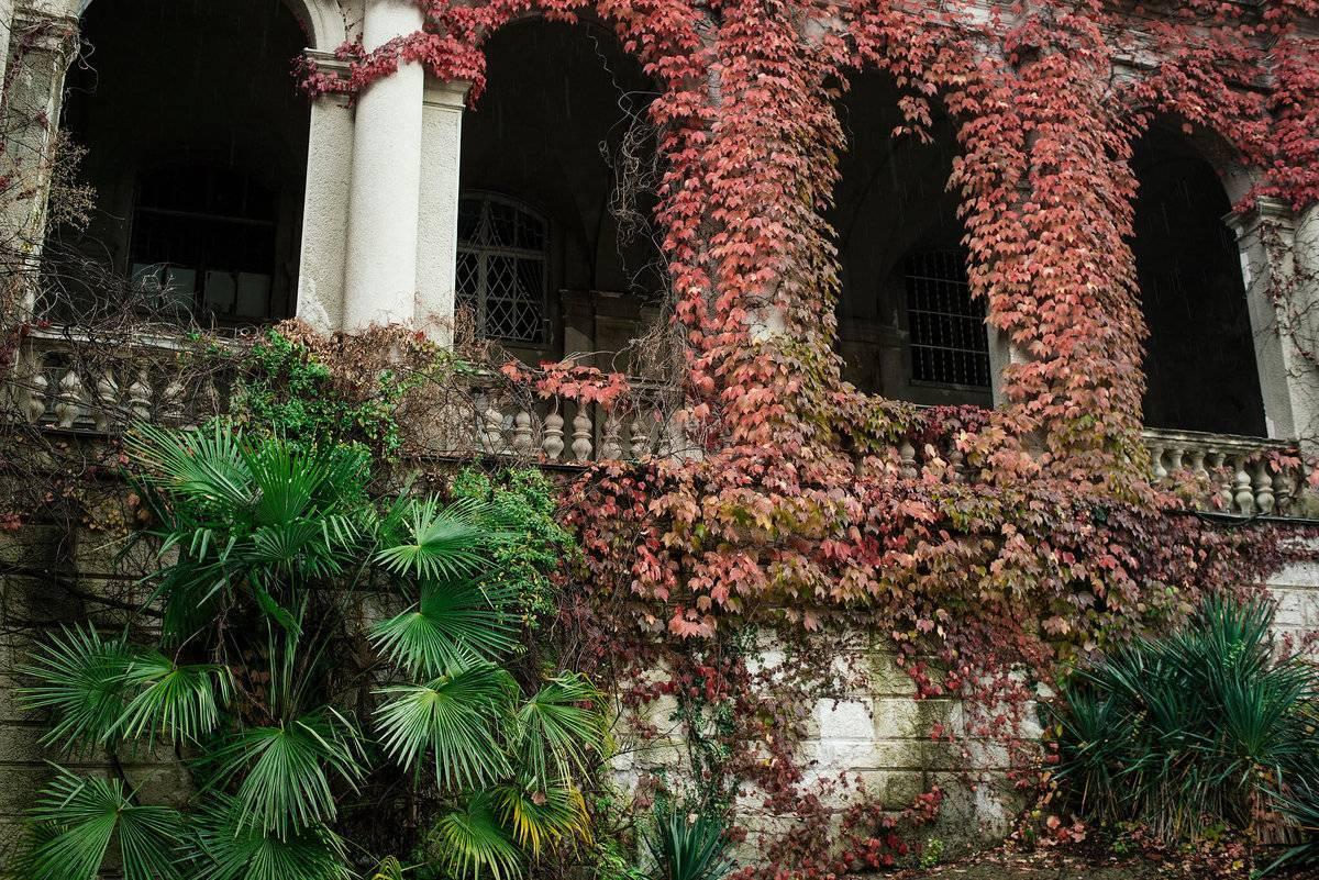 Ореховые тайны «графских садов» — портал ореховод