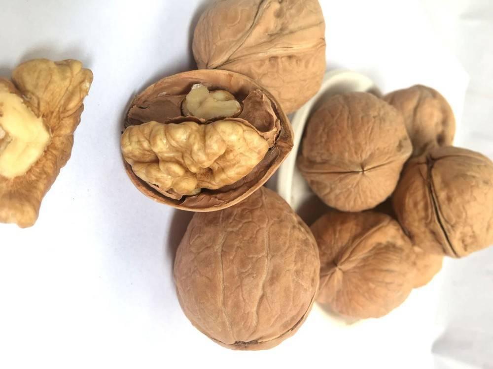 Авелланский орех: польза и вред, рецепты блюд