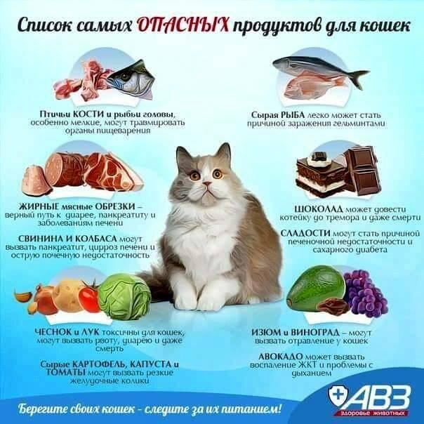 Кошка ест собачий корм: вредно ли это, можно кошкам собачий корм?
