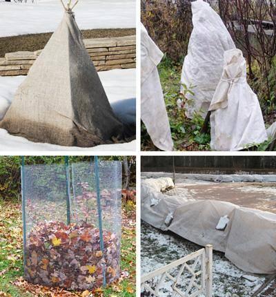 Чем укрыть и утеплить яблоню на зиму от мороза: укрытие для молодых и взрослых деревьев