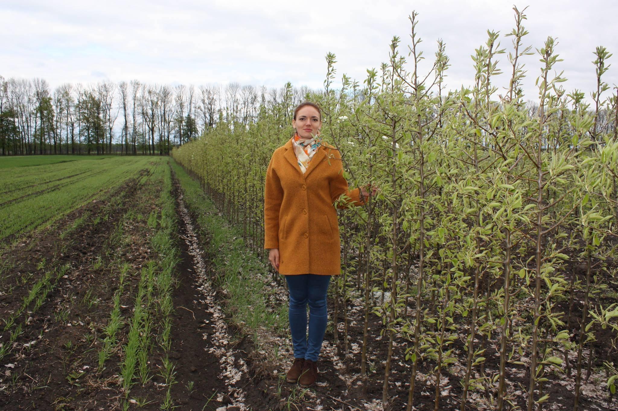 Выращивание фундука в средней полосе россии | fermer.ru - фермер.ру - главный фермерский портал - все о бизнесе в сельском хозяйстве. форум фермеров.