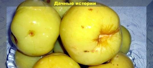 Как в домашних условиях приготовить моченные яблока в капусте быстро и экономно